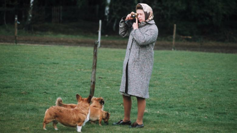 Dronning Elizabeth og hennes corgihunder
