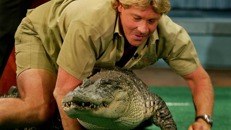 Steve Irwin lener seg over en krokodille