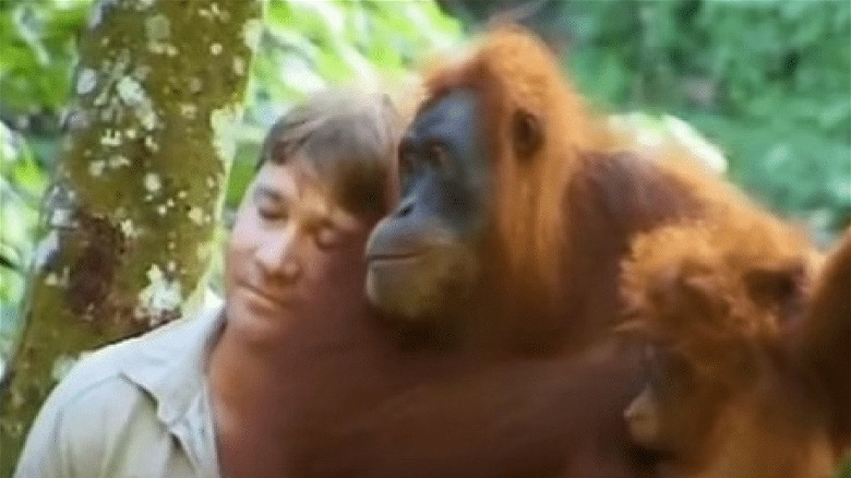 Steve Irwin binder seg med orangutang