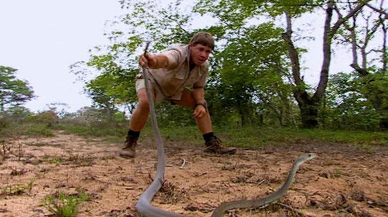 Steve Irwin og svart mamba