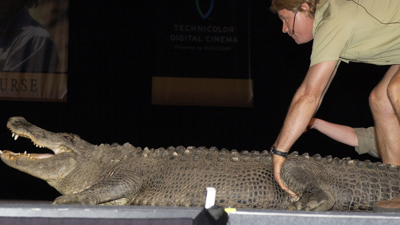 Steve Irwin bøyer seg over en krokodille