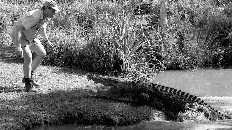 Steve Irwin og en krokodille