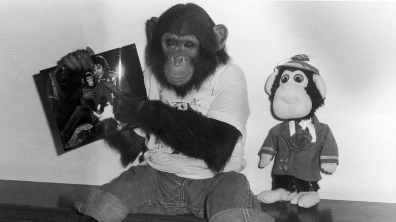 Bobler sjimpansen med bilde av Michael Jackson