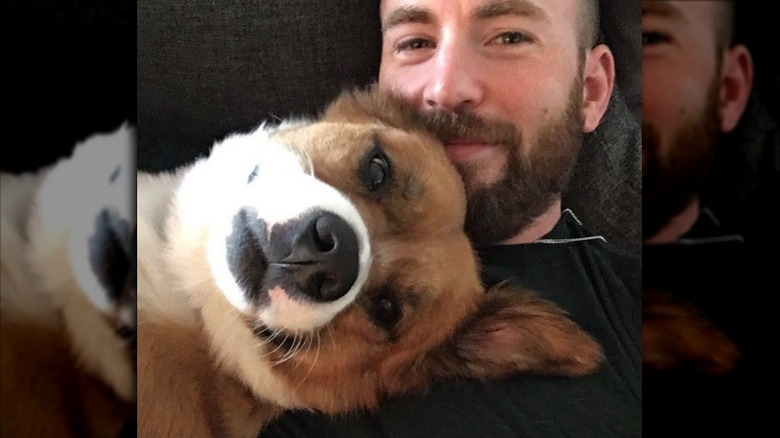 Chris Evans koser hunden Dodger